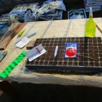 野菜の播種開始