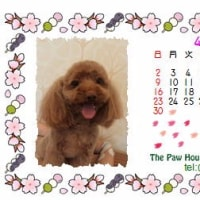 4月カレンダー、時々じゃじゃ丸・・・(笑)