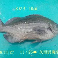 笑転爺の釣行記 11月27日☁ 久里浜海岸(メジナ)