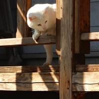 階段の猫、日当たり良好