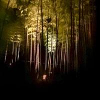 梅香る水戸偕楽園ライトアップ