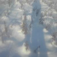 初除雪車入りました道路です。