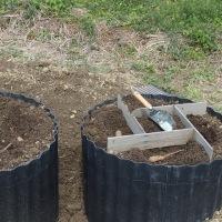 短形自然薯の植え付け 3回目。