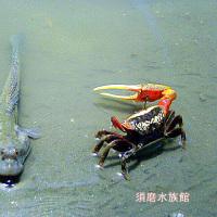●明石海峡と淡路みち(海彦と幸彦)3