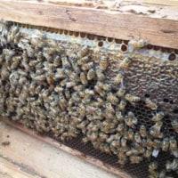 悪魔去り蜜蜂平和