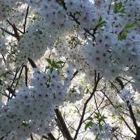 花はさかりに(第95段)