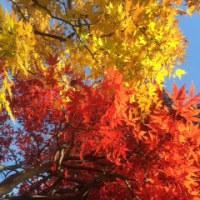 西東京での晩秋の一日満喫