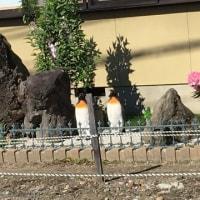 ペンギンが居る庭