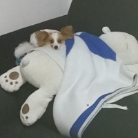 片づけられない抱き枕