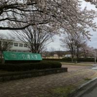 桜が咲いたのに雨模様の会津若松です(..)