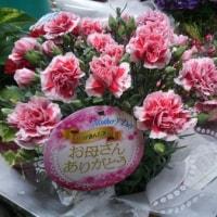 7月23日 明日の誕生花・ゆかりの花 花言葉は?(*^O^*)☆