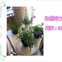 お花をプレゼント!いつもの感謝を込めてシティメガネから皆様に。