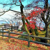 紅葉もそろそろ終わり冬支度のようです。