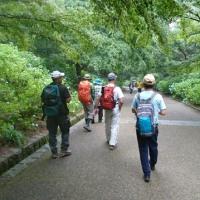 「KOBEおーるエンジョイ倶楽部」!!「神戸市立森林植物園トレッキング」!!