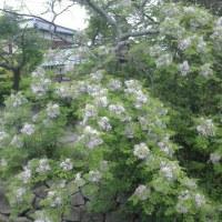 糸島半島ドライブ   1
