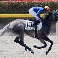 【ビジューブランシュ】函館で続戦へ、馬体回復がポイント!?