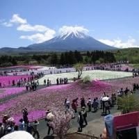 富士芝桜まつりと富士ハーネス