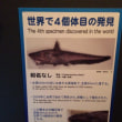 悪魔のサメ(水族館でも出会えない!海のビックリ生物展)