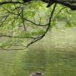 植物園の池