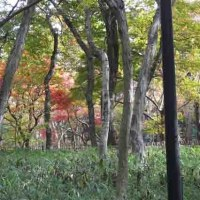 秋を求めてpart3 神代植物公園:調布市