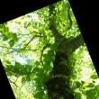 裏磐梯の樹々と遊ぶ(Ⅶ)