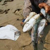 魚の大量斃死で台湾の会社を告訴した   ベトナム