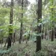木うその森下草刈り作業日が決定いたしました。