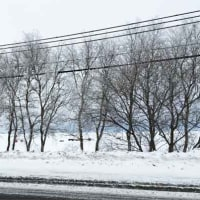【北の雪原 霧氷がつくる冬の花】