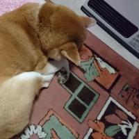 ストーブ番犬