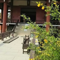 第48回中宮寺山吹茶会へ