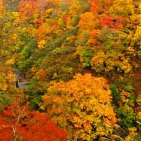 2016白馬山麓の紅葉