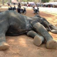 ケニアで観光客がゾウに踏まれ死亡。1か月で2件目!