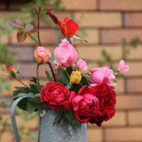 ☆植え替えから誘引へ「庭バラの作業」