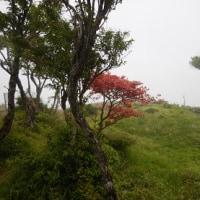 徒歩記録 (西丹沢-檜洞丸ー蛭ヶ岳-丹沢山-塔ノ岳-大倉[2017.6])