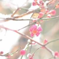 やっと梅が咲きました(^o^)