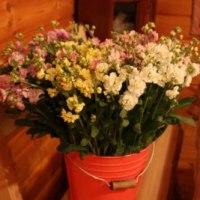 ストックのお花
