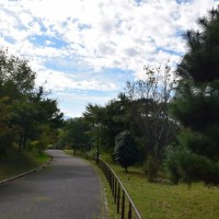 四季折々745  秋の長池公園1