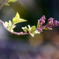 芽吹きの季節♪