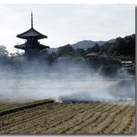 奈良の畦焼き
