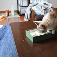 菓子箱乗り&イルカに乗った猫