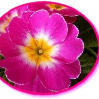 ジュリアンの花