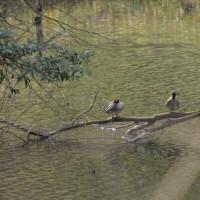 のたりのたり春の池
