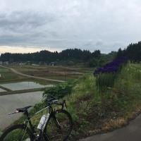 朝 散歩ライド 43km。 & 越後長岡チャレンジサイクリング あと2日で締め切りです!!