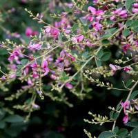 元興寺に咲く花々