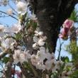 初夏の陽気に...(*^_^*)春をプレイバック...(^o^)/