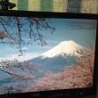 なんと、ソメイヨシノとか、富士山のルーツも、
