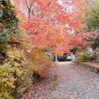 軽井沢のいろいろ 軽井沢の紅葉(11/10) 追分宿、泉洞寺界隈・・