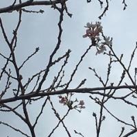 秋の花見♫