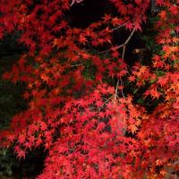 禅隆寺の紅葉と石像。