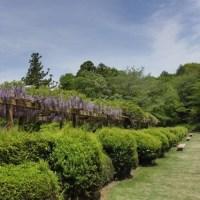 日本の風景:5月②(バラ、その他)